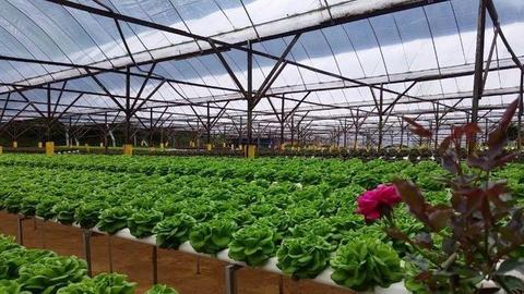 hydroponics/ vertical Farm builders/ manufactures based at Durban