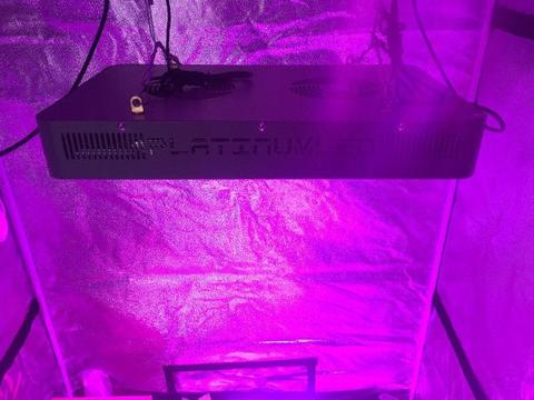 Hydroponic grow room for spectacular vegetables and beautiful flowers!!!!!!