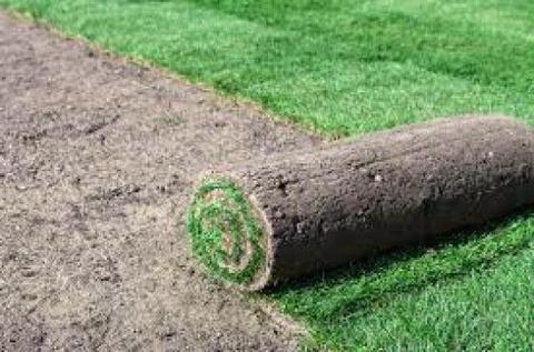 Kikuyu Grass Instant lawn