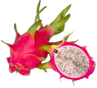 Dragon Fruit Pitaya (Self-pollination) FOR Sale